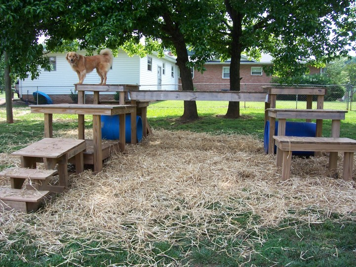 backyard dog playground ideas