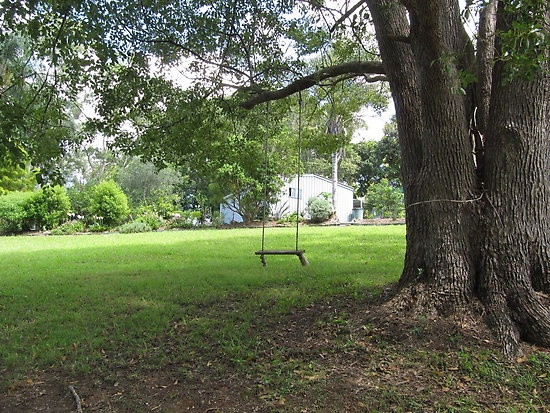 backyard swings for trees