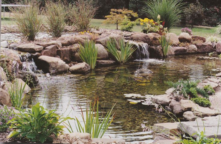 Backyard Koi Pond Kits Various Design