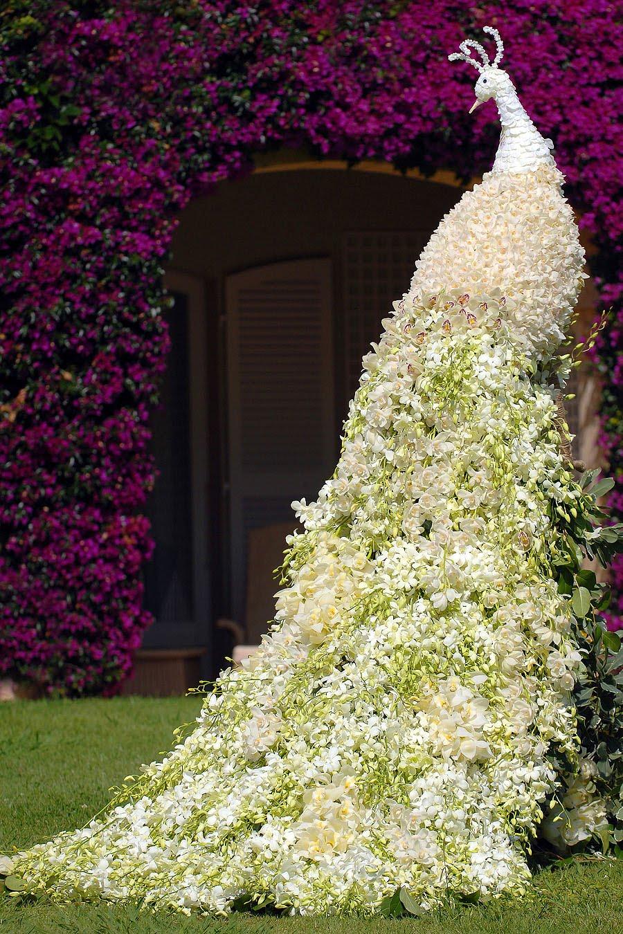 Garden Flower Chinese Jasmine Design And Ideas