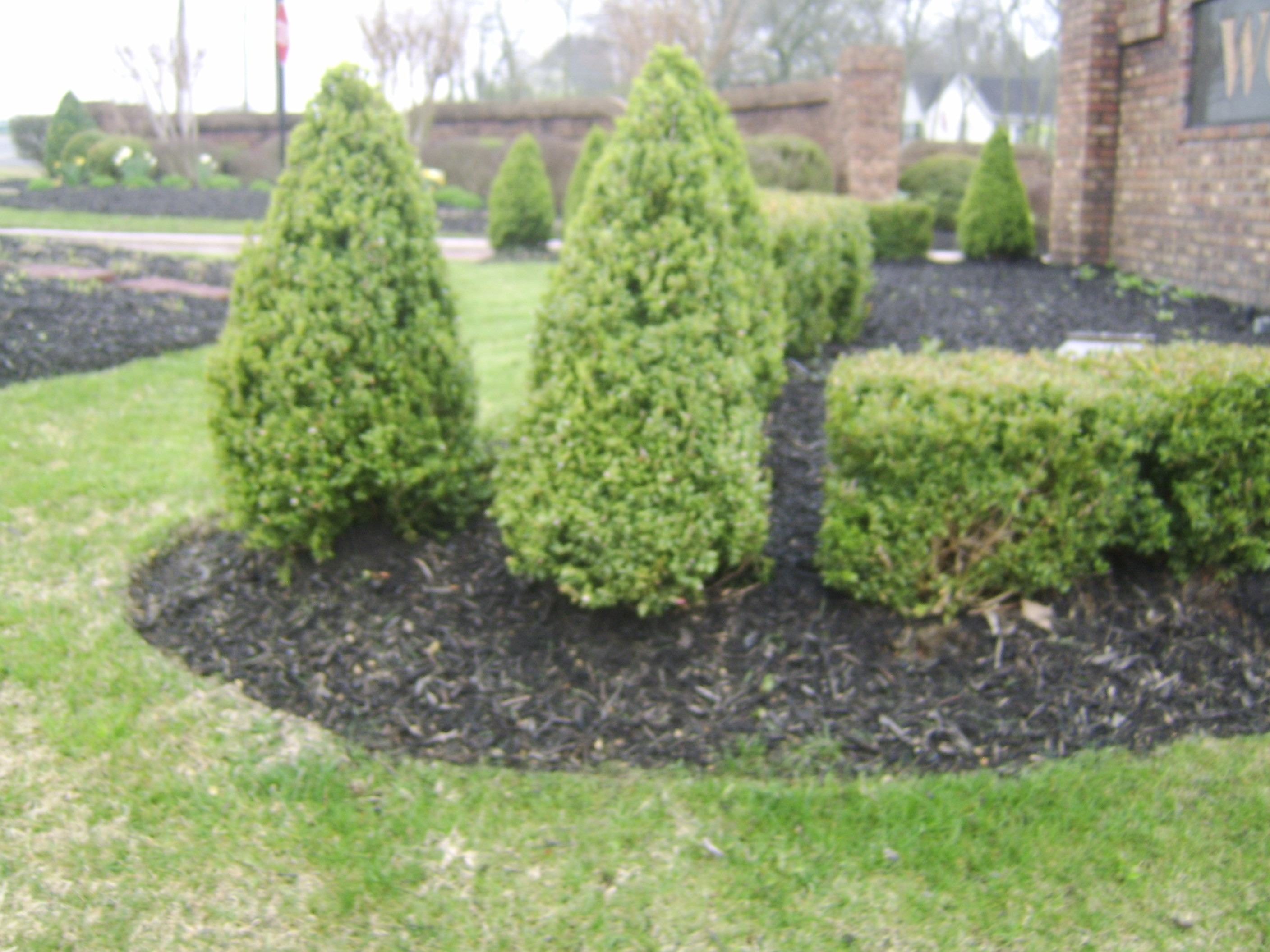 low maintenance landscaping bushes