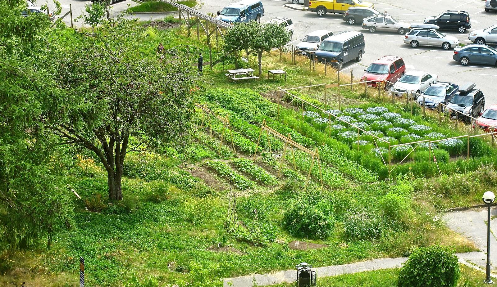 Superior Orchard Garden