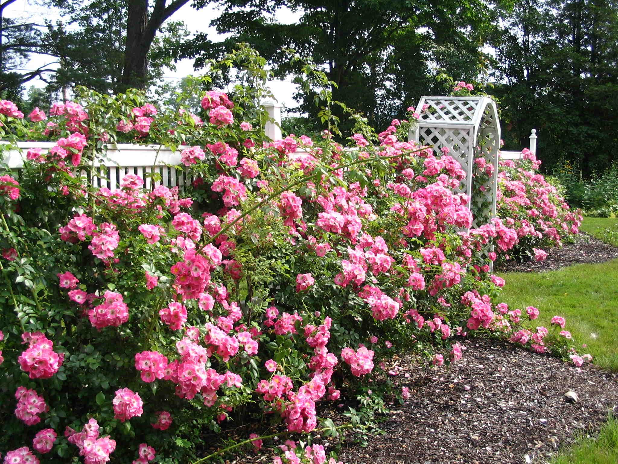 Elegant Rose Garden