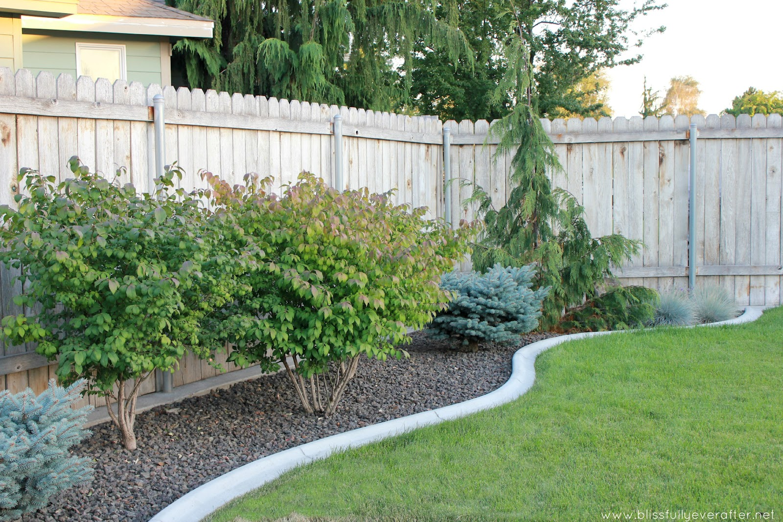 small backyard landscaping ideas with dogs