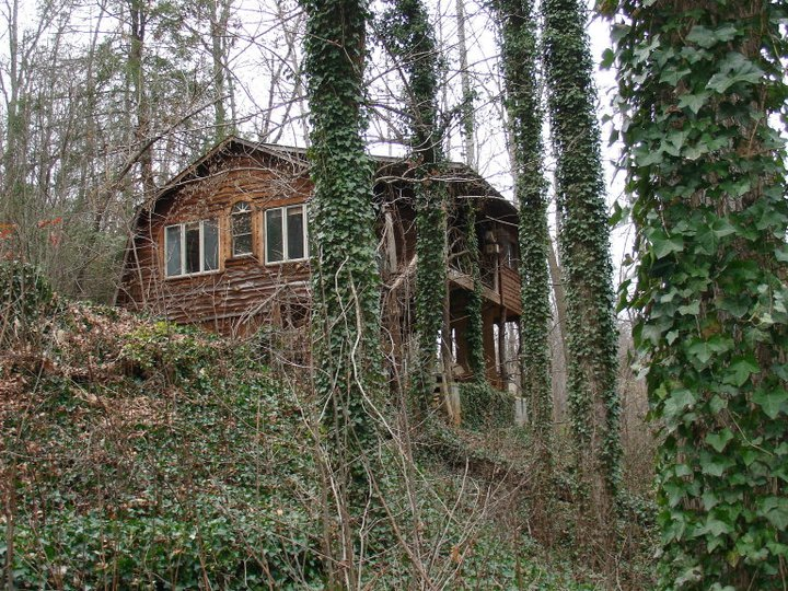 Treehouse Cabins Nc  photo - 2