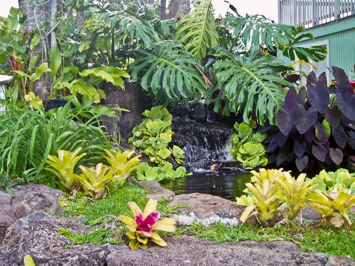 Tropical landscaping plants the image for Tropical landscape