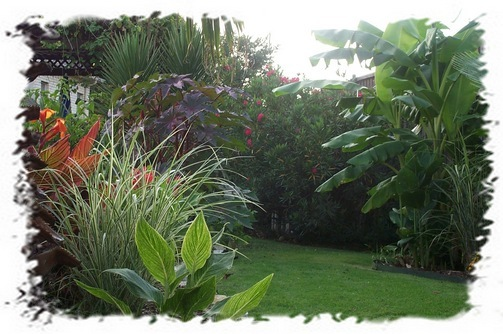 tropical landscaping ideas for backyard  photo - 2