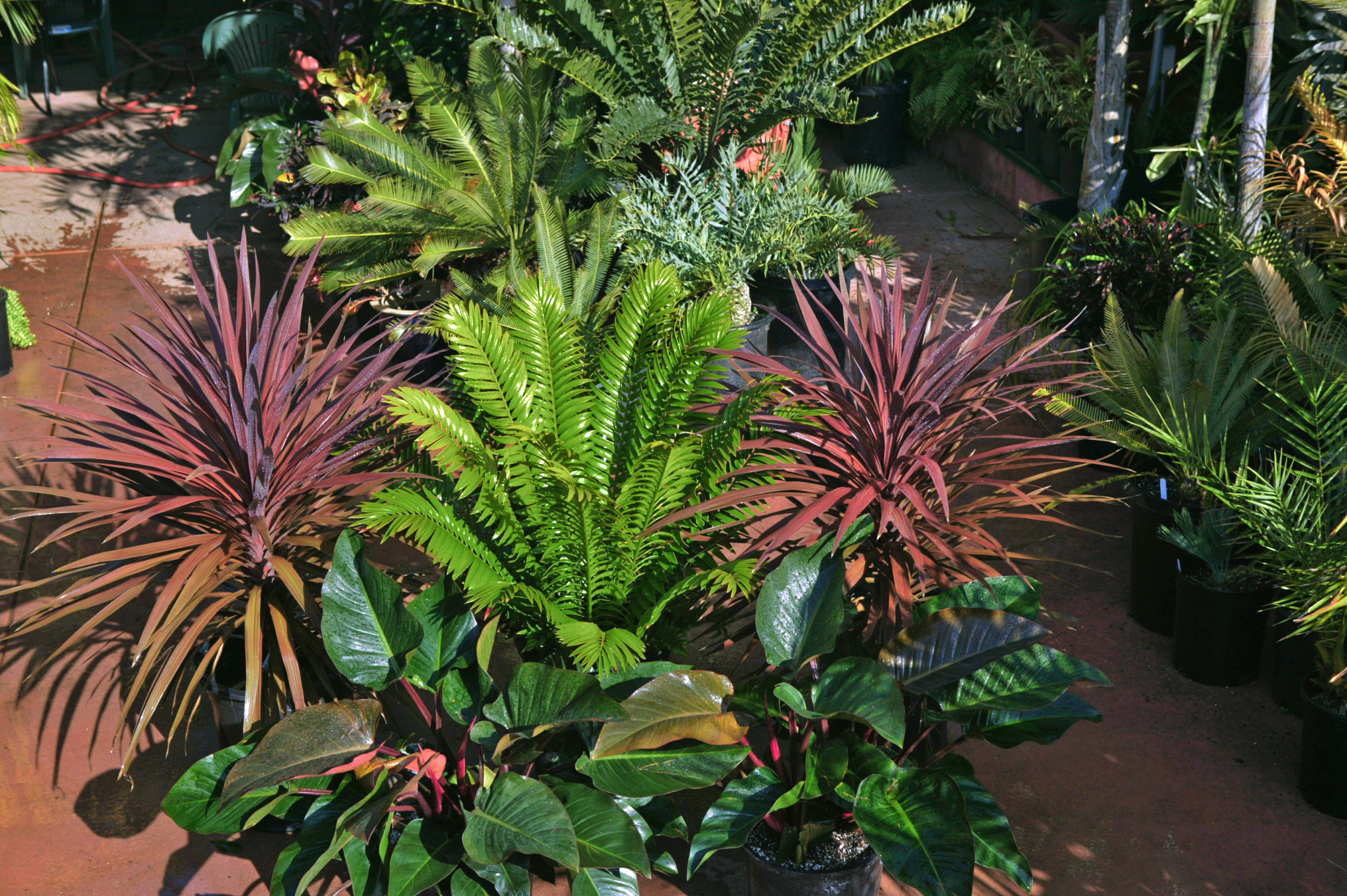 Tropical plants and landscaping design and ideas for Plants for outdoor garden
