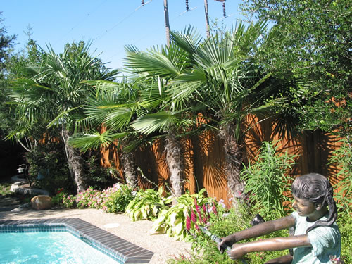 Tropical Landscaping Texas 187 Design And Ideas