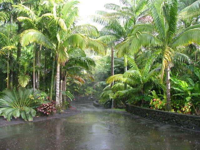 tropical landscaping trees