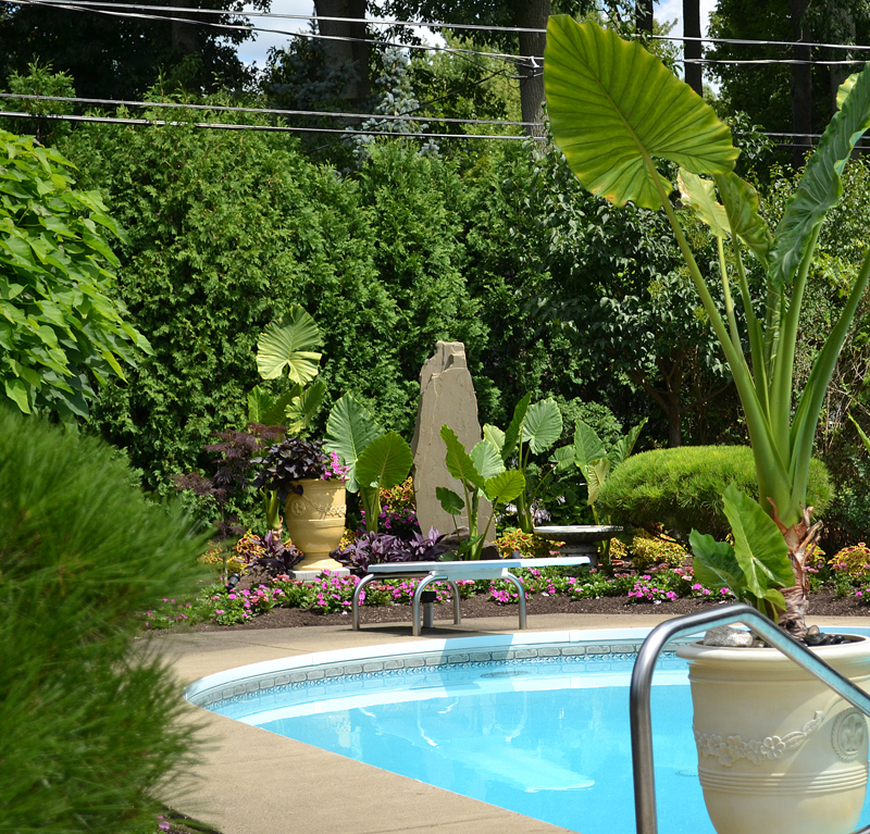 Tropical plants landscaping around pool design and ideas for Flowers around swimming pool